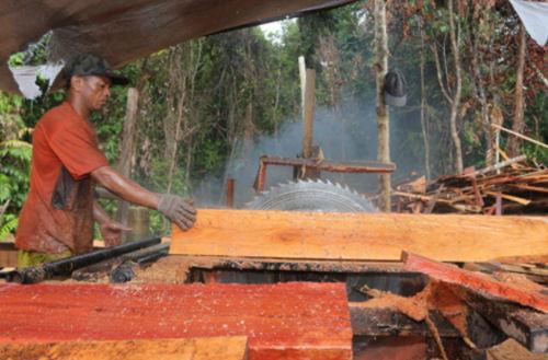 April_2020_-_Indonesia_risks_timber_trade.jpg