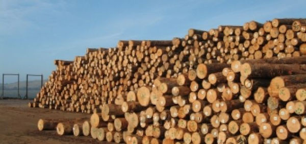 Aug_2020_-_German_softwood_logs_exports_to_China_doubled_in_the_first_half_(600_x_283).jpg