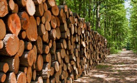 Jan_2018_-_Timber_industry,_grow_economy_-_Large.jpg