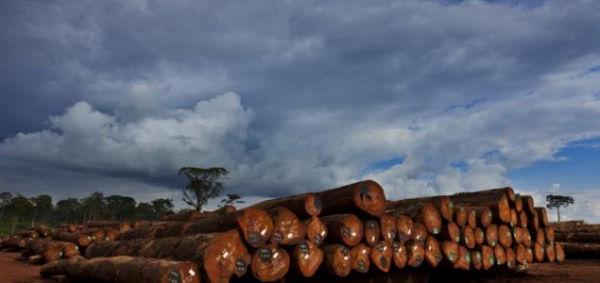 June_2020_-_UK_tropical_wood_trade_.jpg