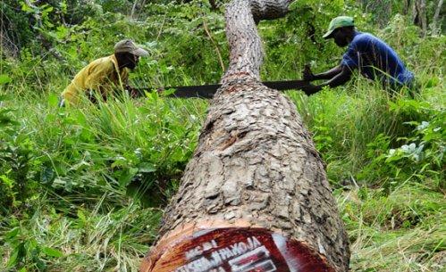 March_2018_-_Tanzania_timber_trade_-_large.jpg