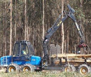 Nov_2017_-_Australian_forestry_-_Large.jpg