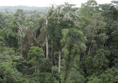 Nov_2017_-_Ghana_forestry_-Large.jpg